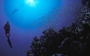 Egypt- Sport- Reef 2000- Blue diver