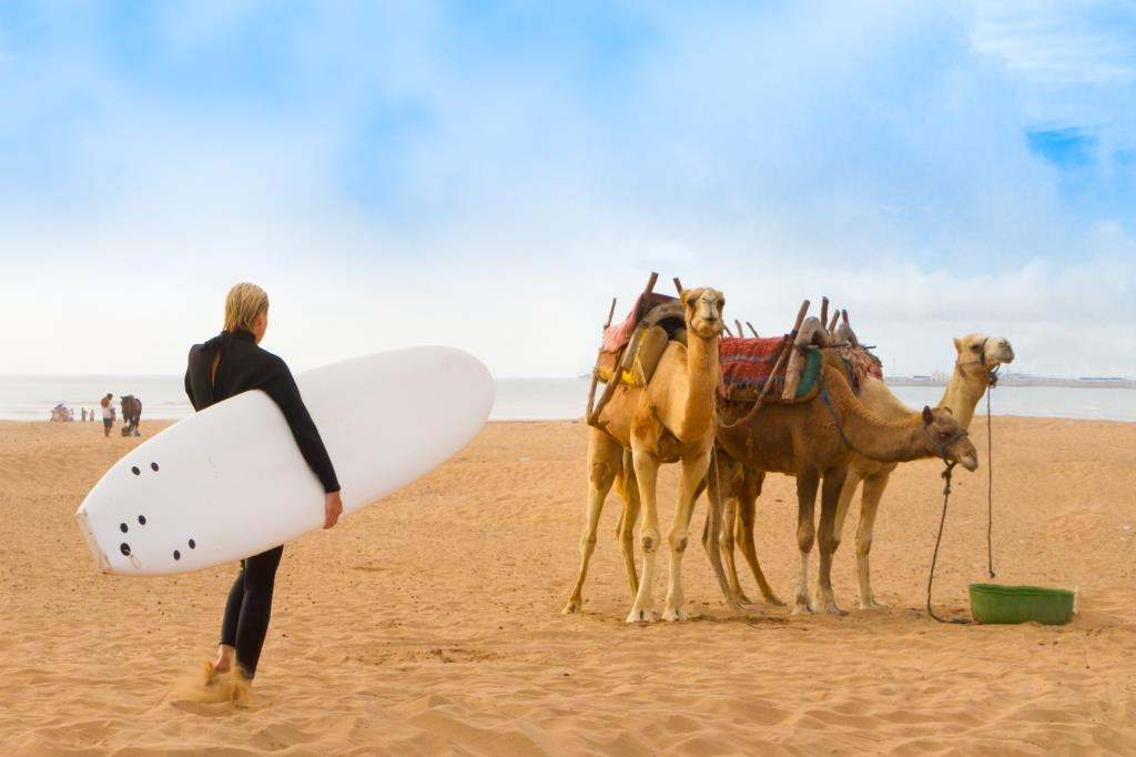 surfer and camel on beach in Morocco on holiday