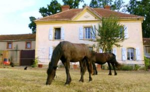 Horse Riding And Wine Tasting Holiday, Bordeaux - horses and house
