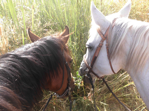 horse riding wellness holiday spain