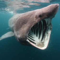 Scotland Basking Shark Adventure