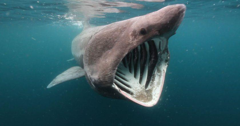 Scotland Basking Shark Adventure