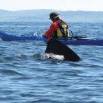Island Sea Kayak Adventure
