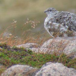 Wildlife Photography Adventure Scotland