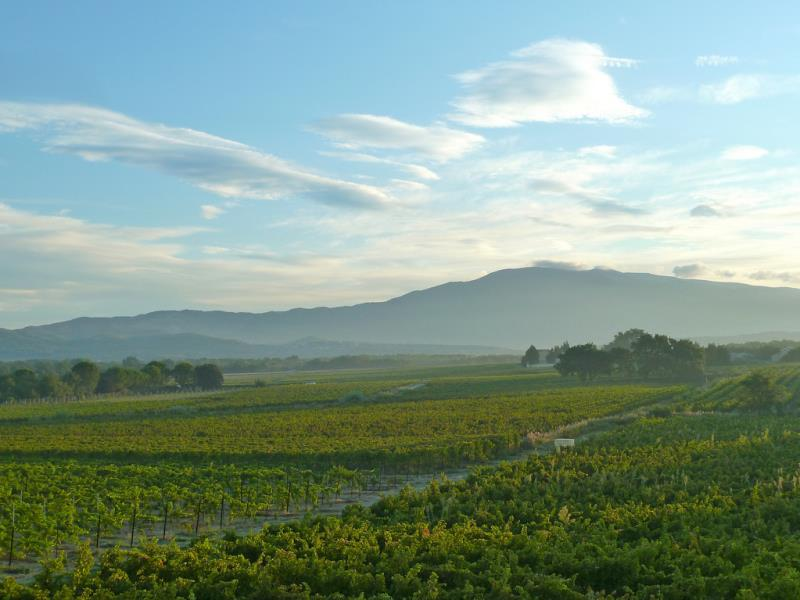vineyard in Provence during wine tasting weekend