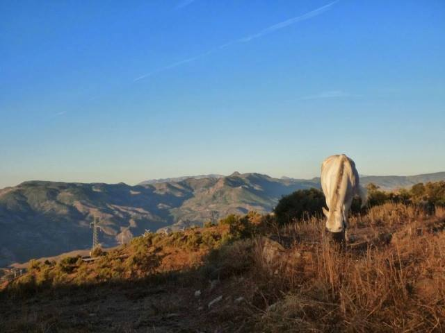 Andalucia horse on top of mountains