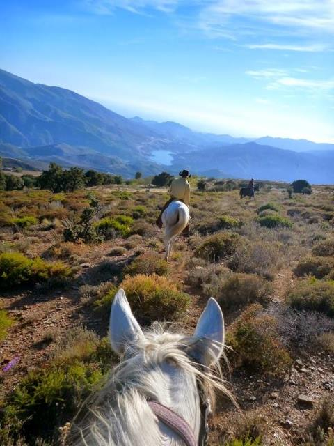 Andalucian scenery from atop a white horse with rider in front