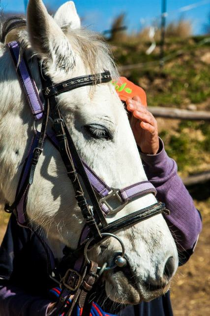 close up of Andalucian horse's face and rider petting it