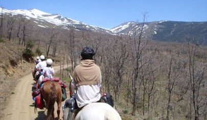 Group riding trail in Andalucia while on holiday