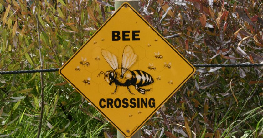 Honey Bee Spa - These Bee are not Cross just Crossing