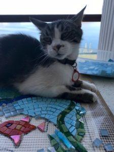 cat sitting on mosaic work in progress