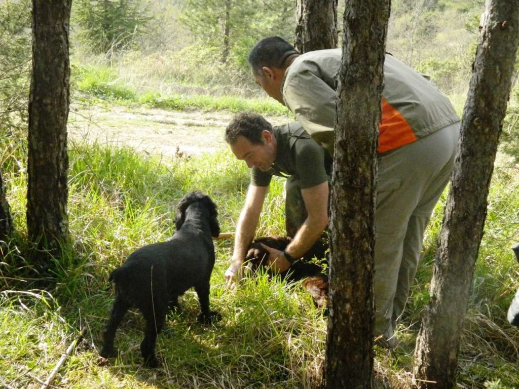 men and dog hunting for truffles in italy