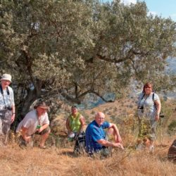 photographers sitting under olive tree in Andalucia