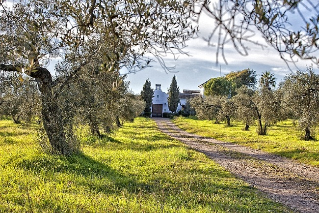 Spanish hacienda and tree lined path