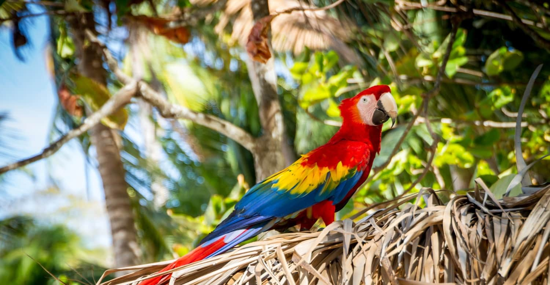 colourful macaw in costa rica