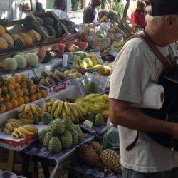 Fruit-Tasting In the Brazil