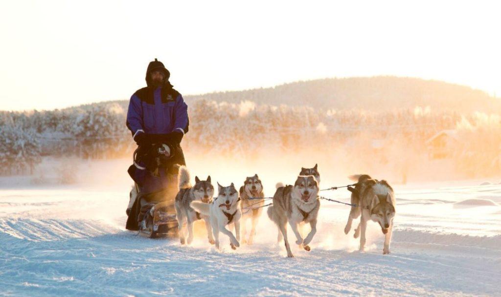 husky ride across snow