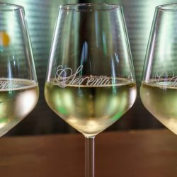 glasses of white wine for tasting course in Tuscany