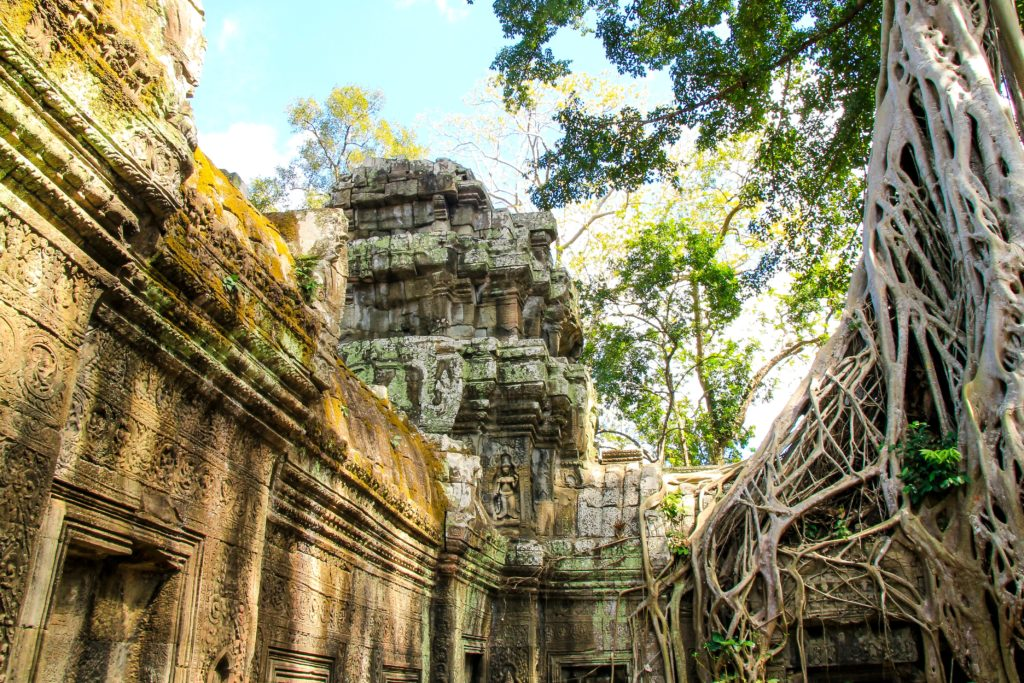 temple and creepers in cambodia