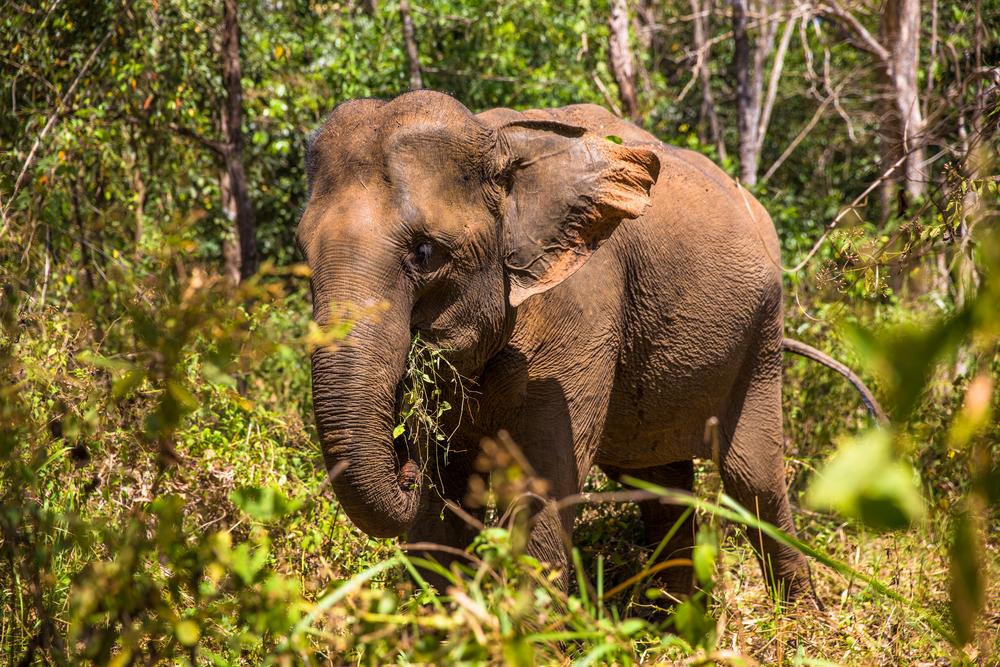 elephant on a wildlife holiday in cambodia