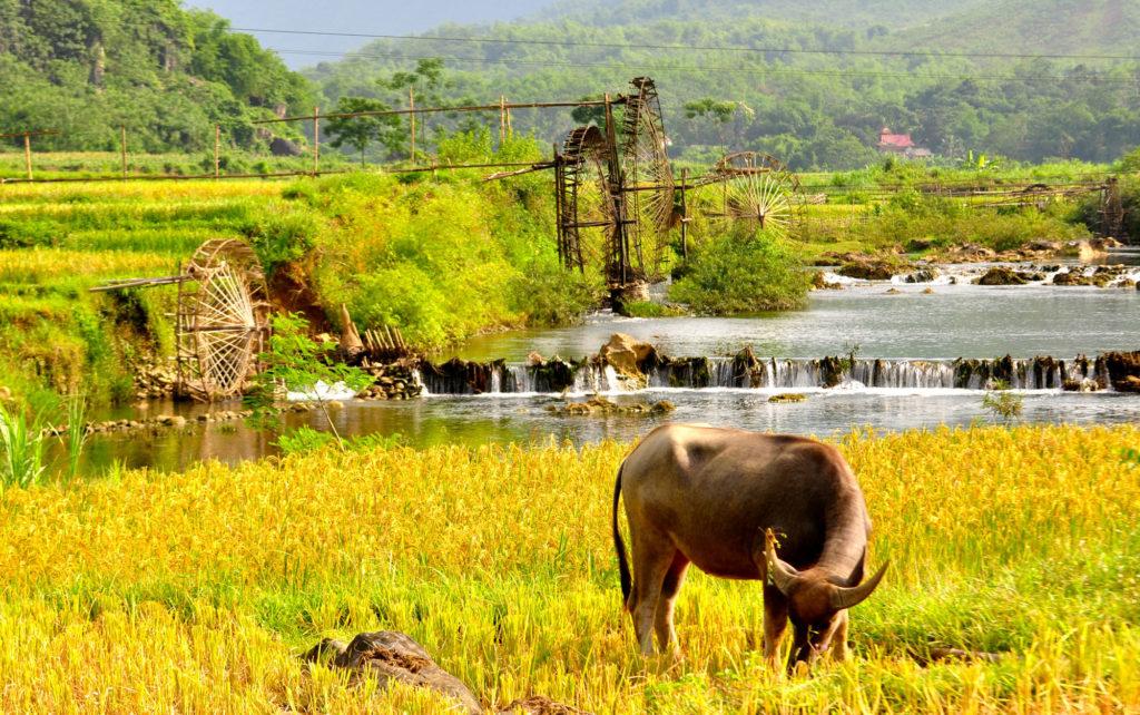 waterwheel in puluong vietnam