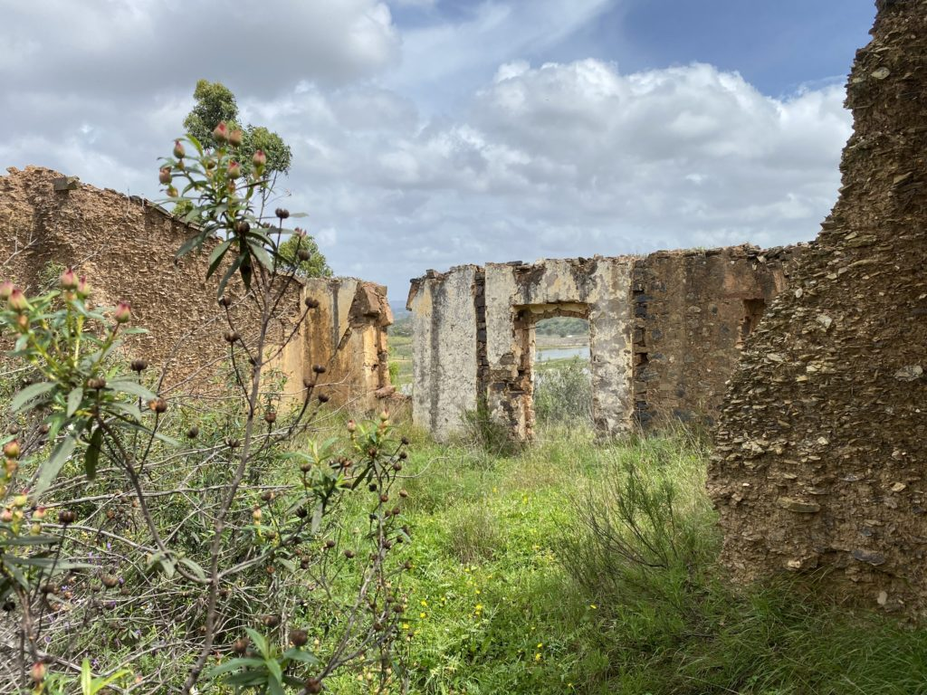ruins in an overgrown field