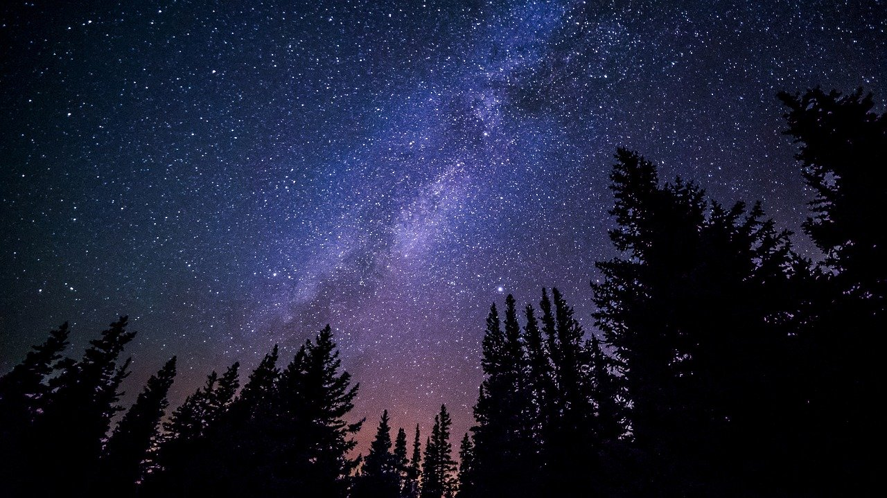 starry night sky and tall trees