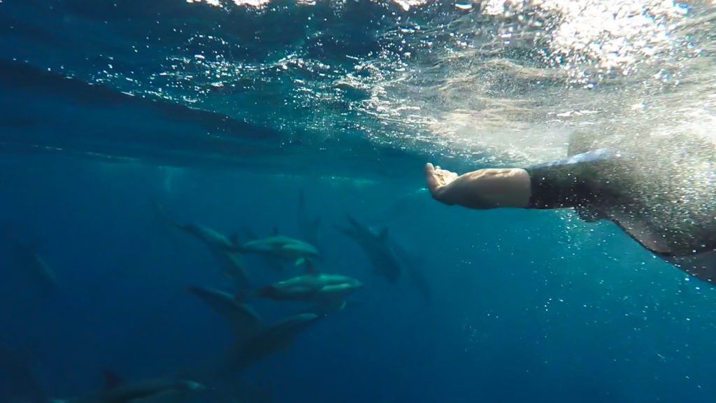 swimming with dolphins on a wildlife holiday