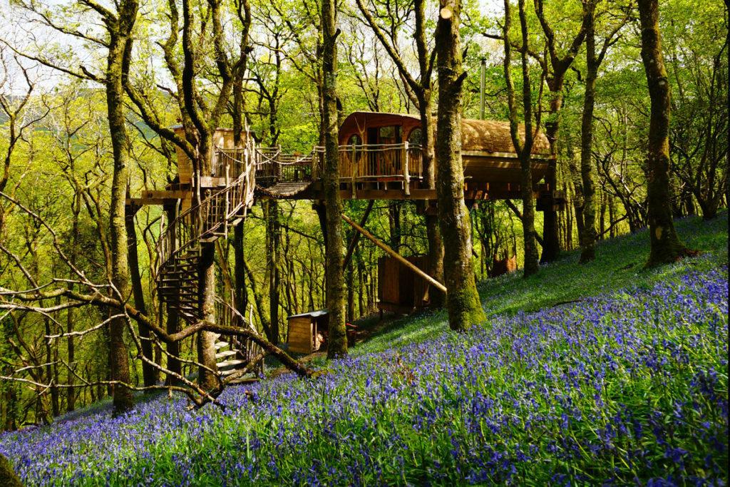 luxury treehouse in trees in Wales