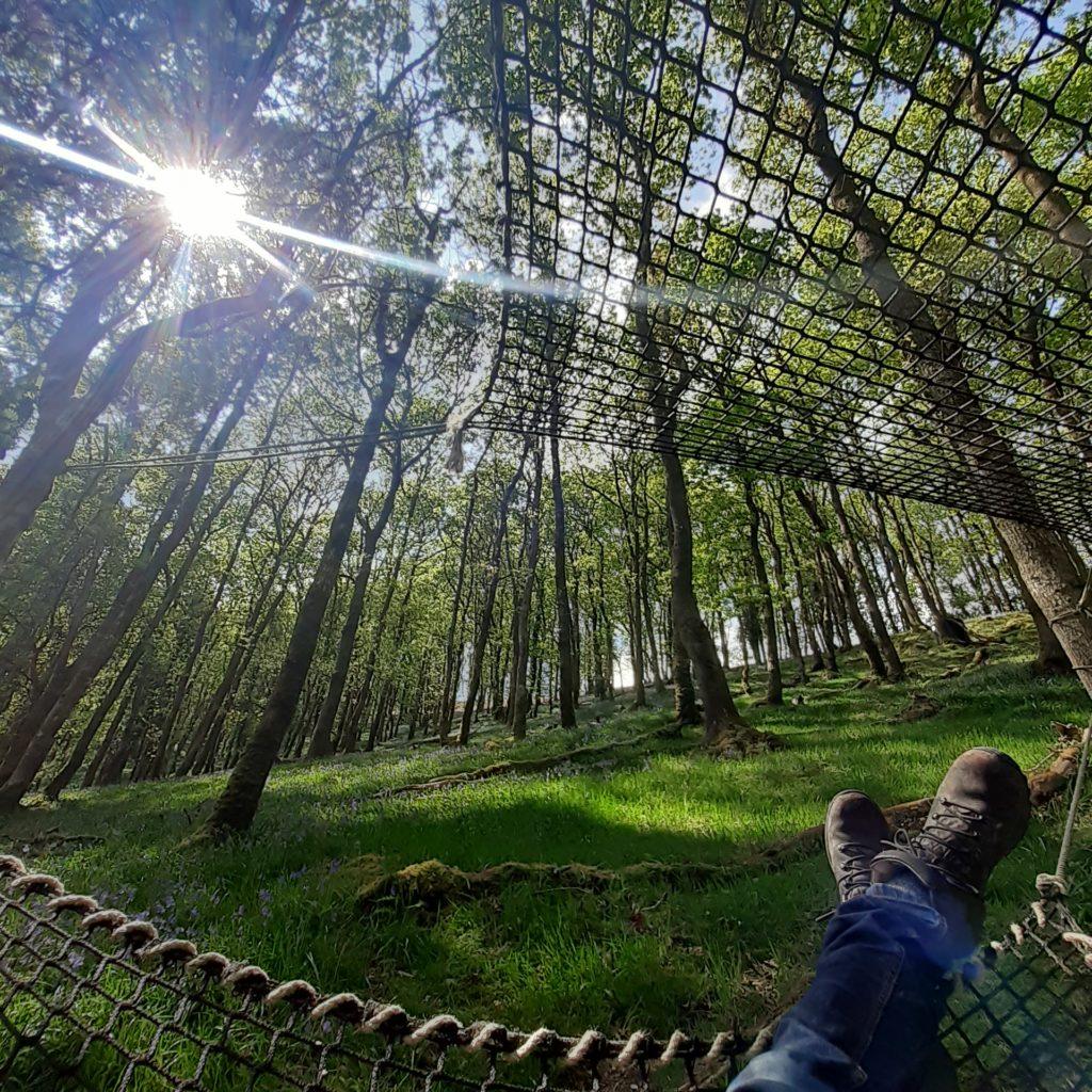 man in hammock looking up at tree tops