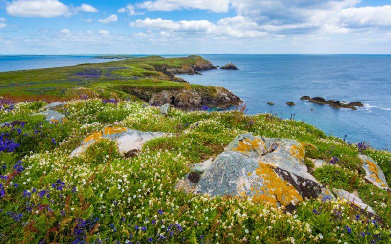 Wild Atlantic coast line with wild flowers