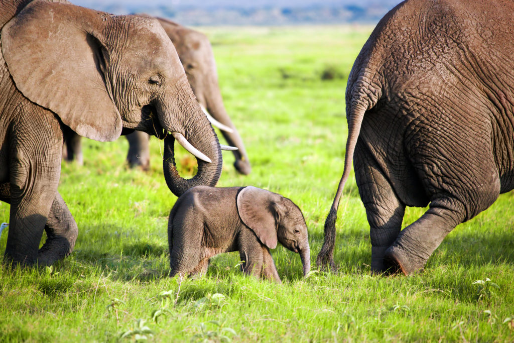 baby elephant with adults on a wildlife holiday