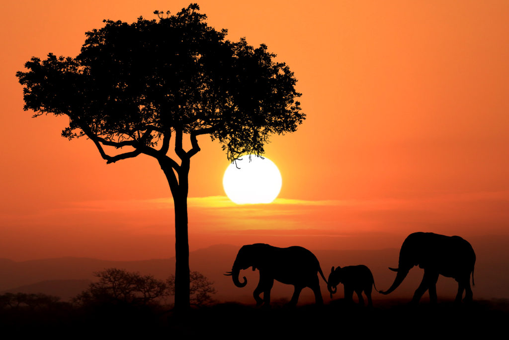 three elephants and a tree silhouetted in south africa