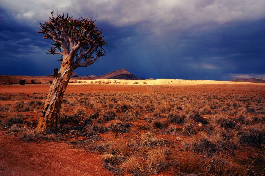 tree standing in the namibian desert
