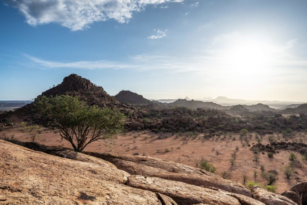 tree and hills in namibia