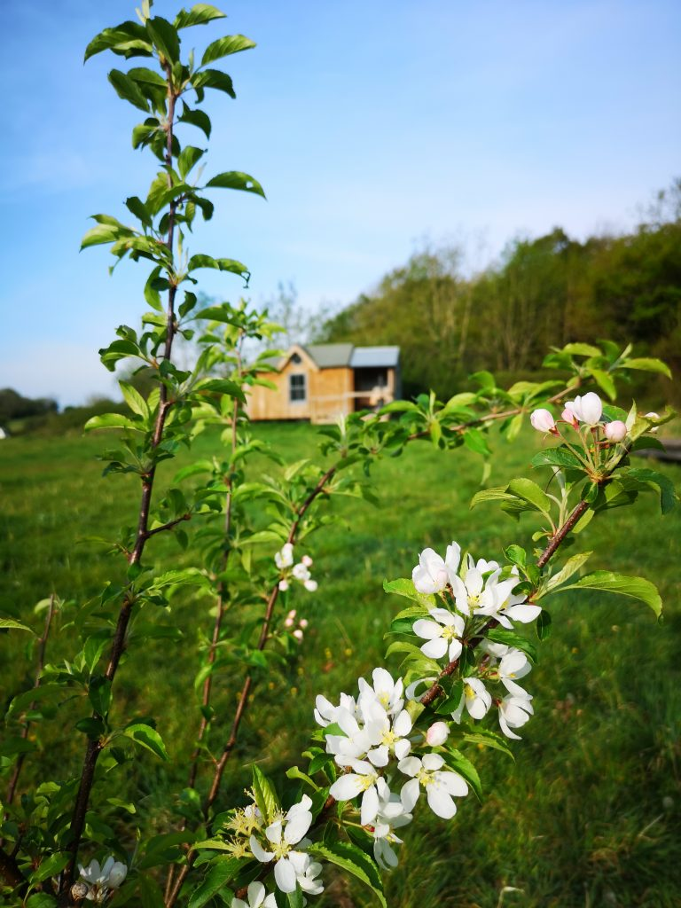 chapel in a field in devon