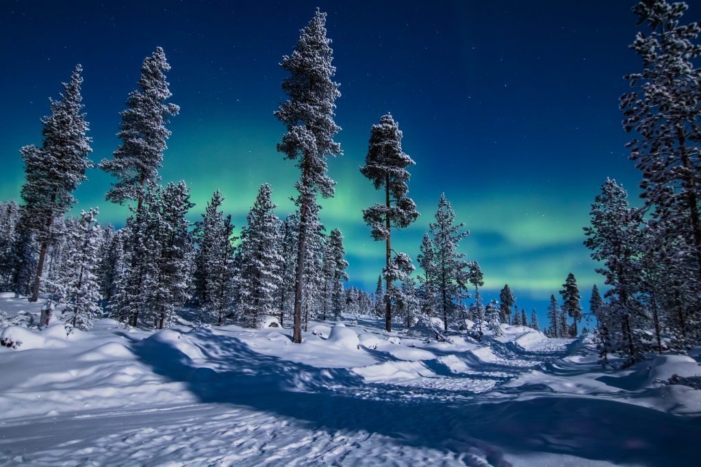 finland northern lights over the trees