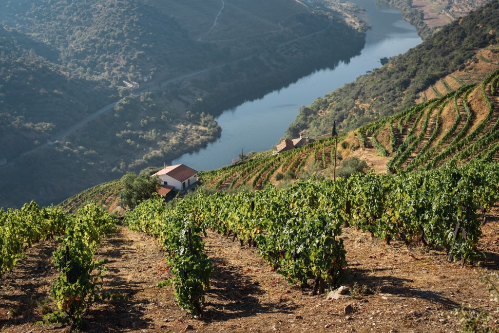 winery in the douro valley portugal