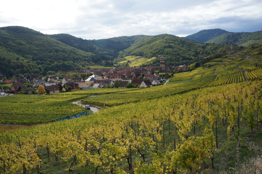 hills and vineyards in france