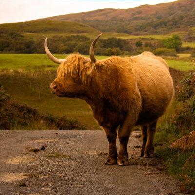 Northern Scotland